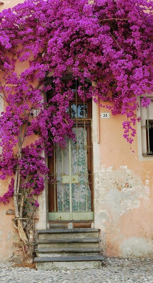 Bouganvilla Doorway Fine Art Print - Allen ...fineartamerica.com