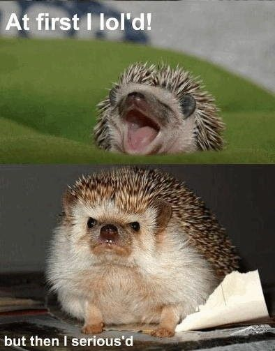 Wish I had a hedgehog.