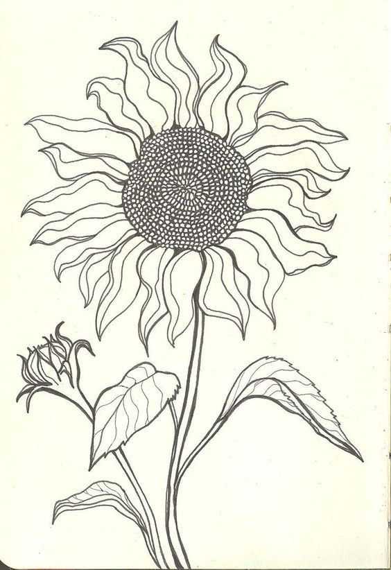 Sunflower Drawings Sunflower Drawing Tumblr Sad