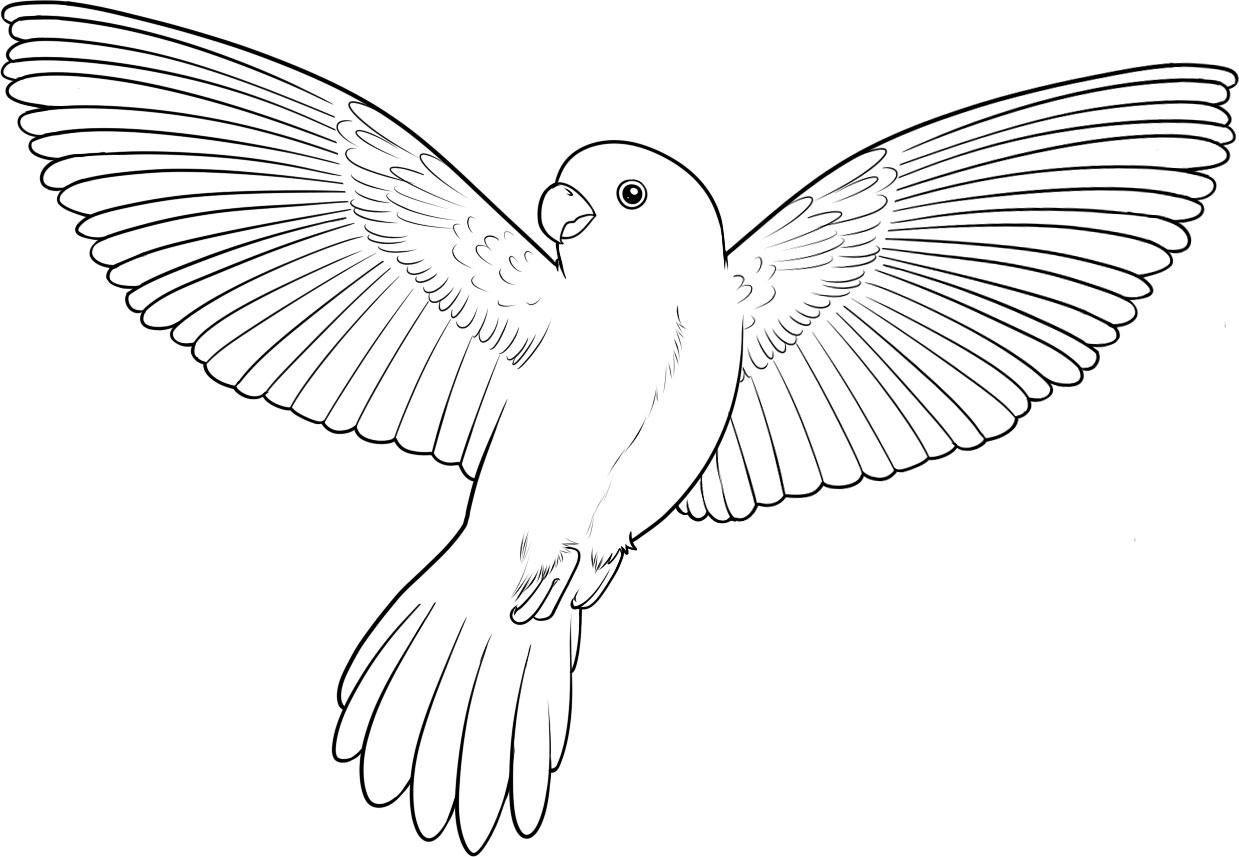 Parrot Coloring Pages Cerca Con Google Handverk