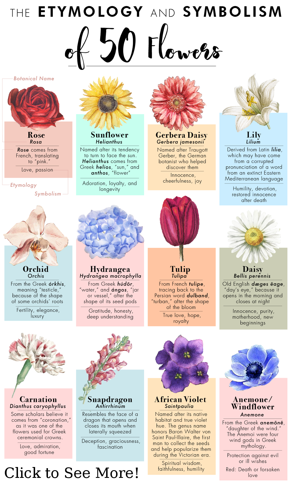 The Etyomology And Symbolism Of 50 Flowers Different Kinds Of Flowers Flower Meanings Flower Guide