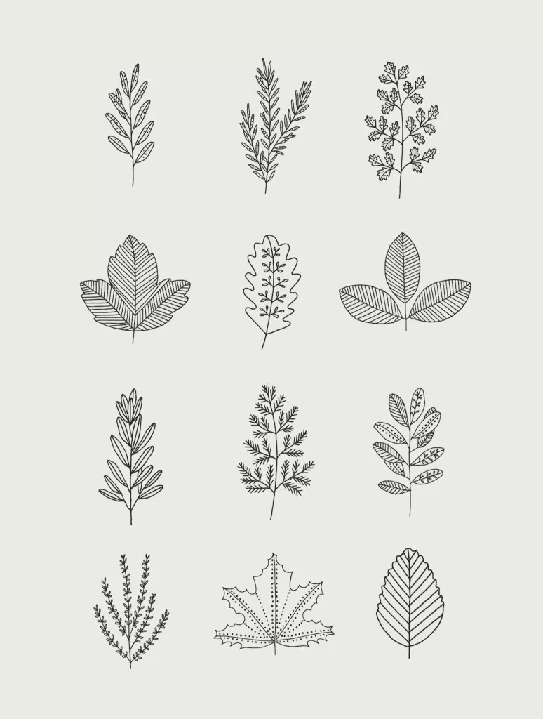 30 Ways To Draw Plants Leaves Leaf Drawing Plant Drawing Leaves Doodle