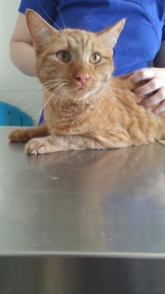 Profile Cat Profile Losing A Pet Cat Adoption
