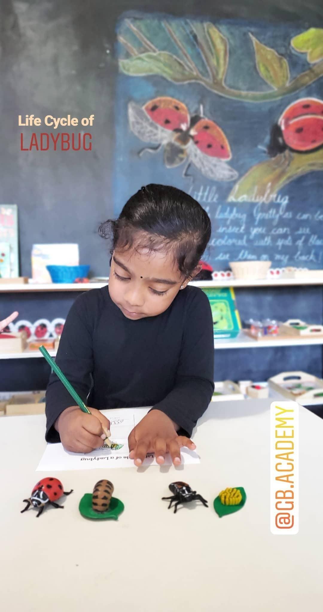 Montessori Preschool Ladybug Homeschooling