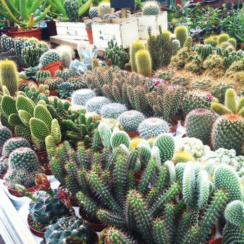 Mostra Mercato Piante Grasse e Succulente - 2014 | Piante ...