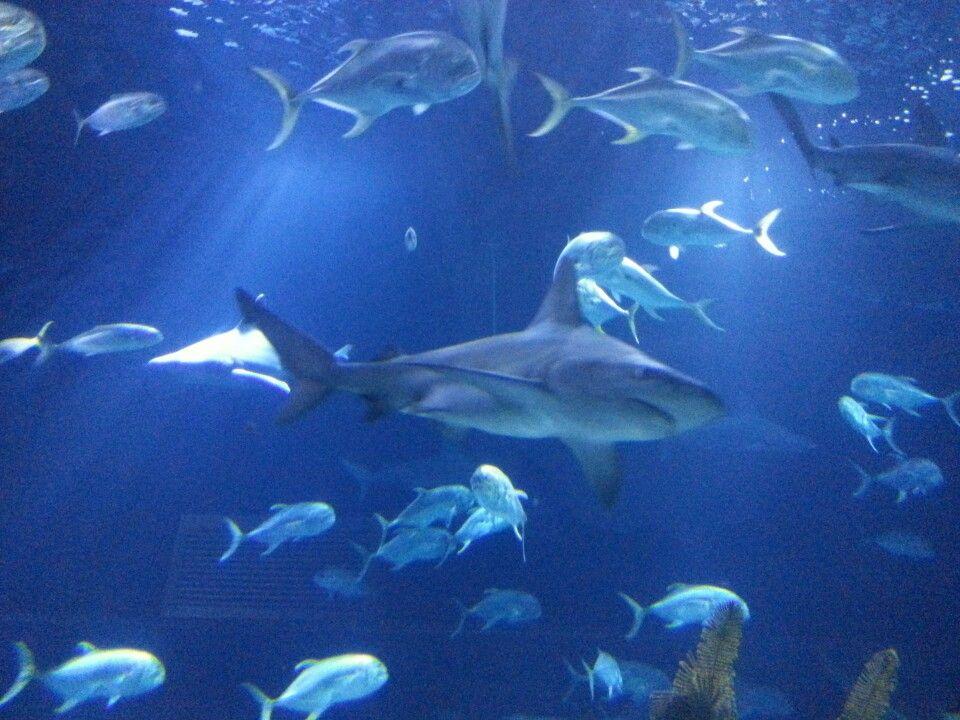 Omaha's Henry Doorly Zoo and Aquarium in Omaha, NE | Zoo ...