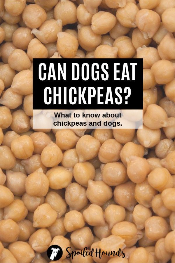 Can dogs eat chickpeas? Keep your dog safe and find out what you need to know about dogs and chickpeas on Spoiled Hounds. #pets #dogs #doglovers #dogfood #chickpeas #doghealth #doginformation #dogownertips