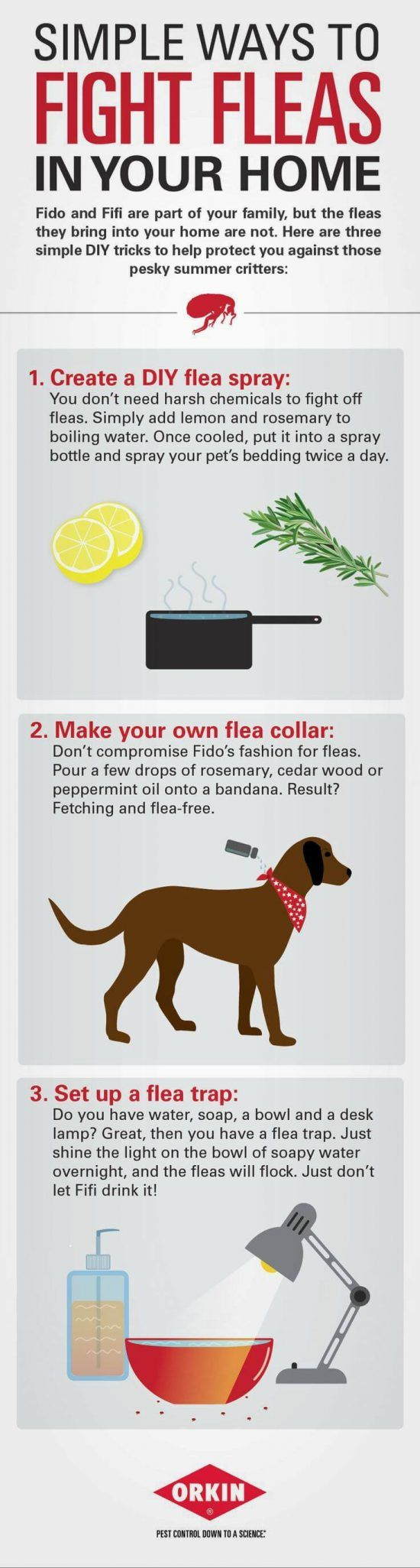 How To Get Rid Of Fleas In The House Video Tutorial ...