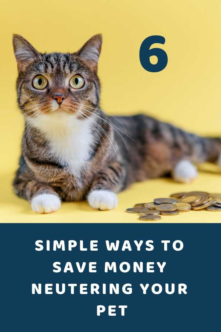 Neutering your Pet 6 Simple Ways to Save Money (With