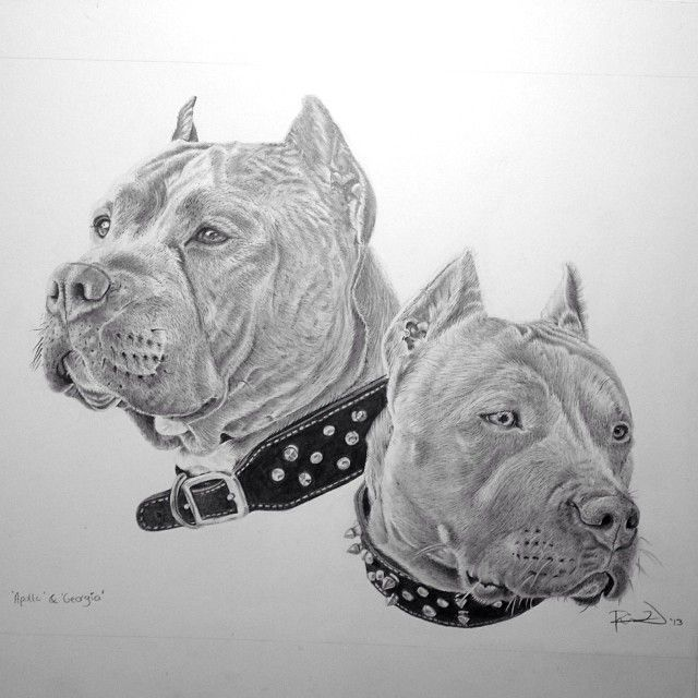 Pitbulls pit bulls dog art dog tattoos pitbull drawing - Dessin de pitbull ...