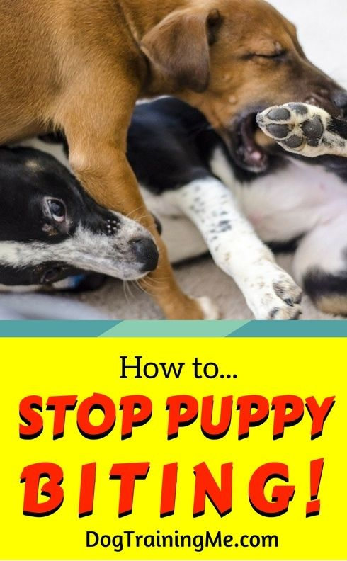 how to stop puppy from biting me