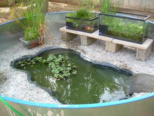 Pin de aleydis montero 2 0 lite en peceras acuarios - Estanques para tortugas de agua ...