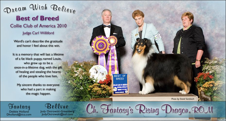Ch Fantasy S Rising Dragon Rom Best Of Breed Collie Club Of