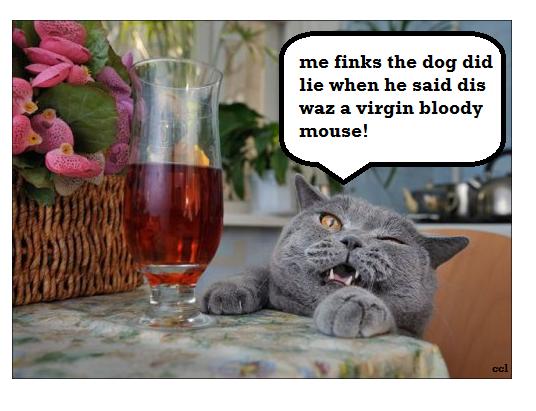 LOL CAT me finks the dog did lie when he said dis waz a