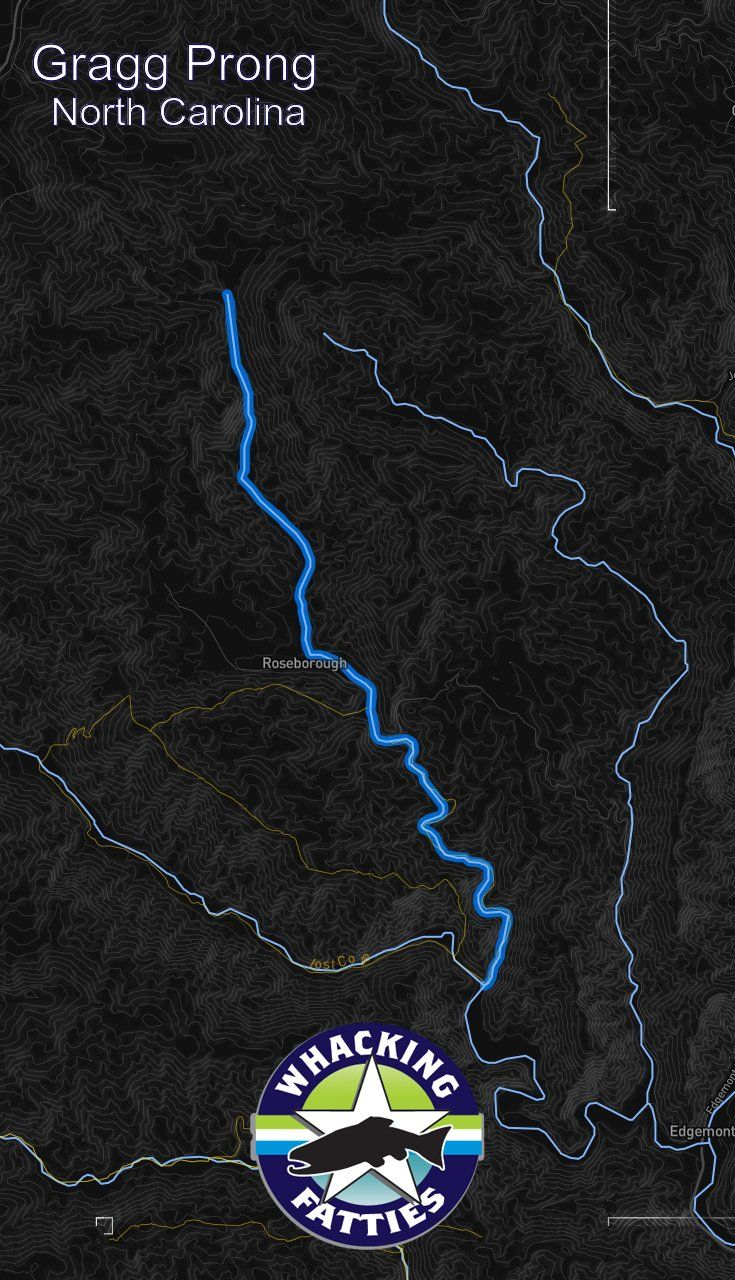 Gragg Prong Fishing Report Fly fishing, Fly fishing for