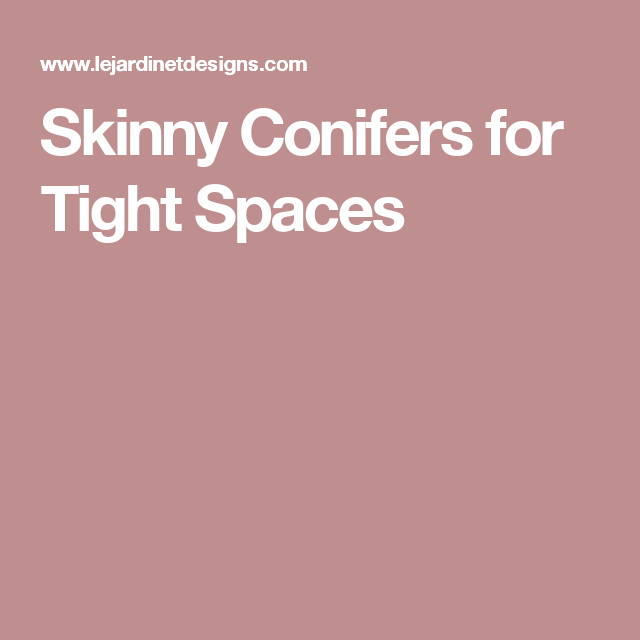 Skinny conifers for tight spaces landscape pinterest for Skinny trees for tight spaces