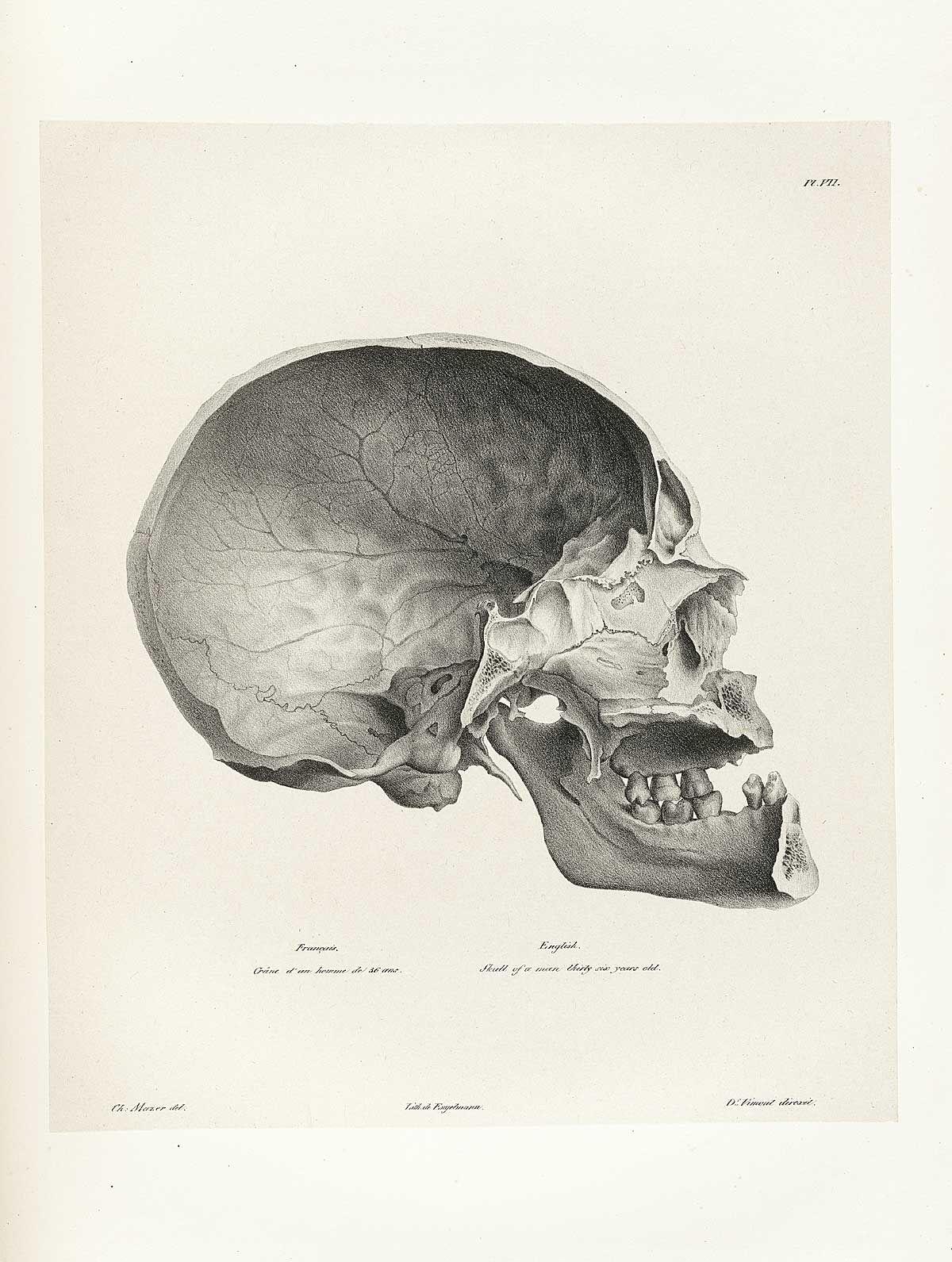 A Man S Eye Medical Drawings Drawings Skulls Drawing