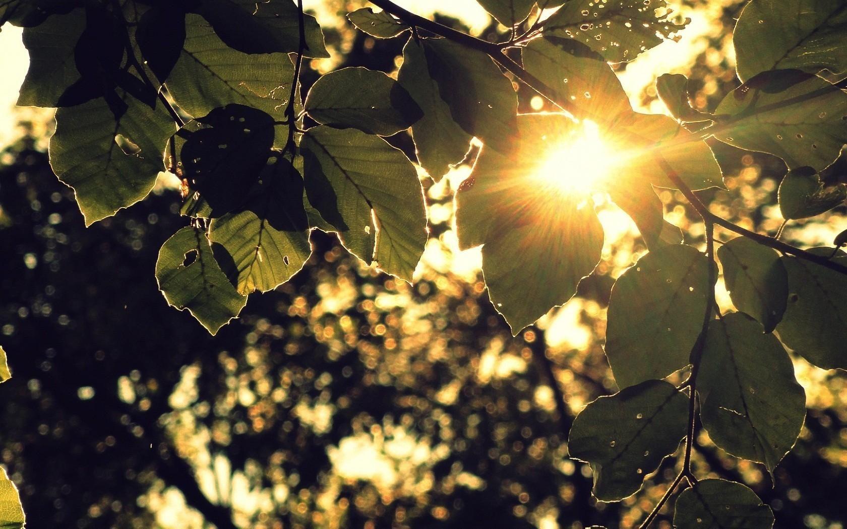 Солнце за листьями обои для рабочего стола, картинки, фото ...
