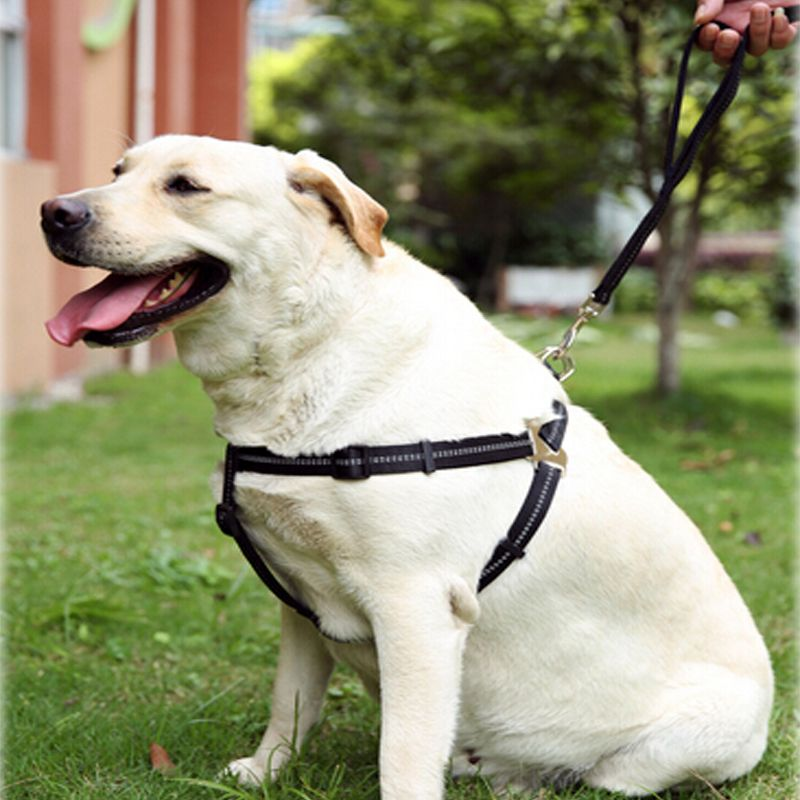 Find More Dog Collars Leads Information About High Reflections