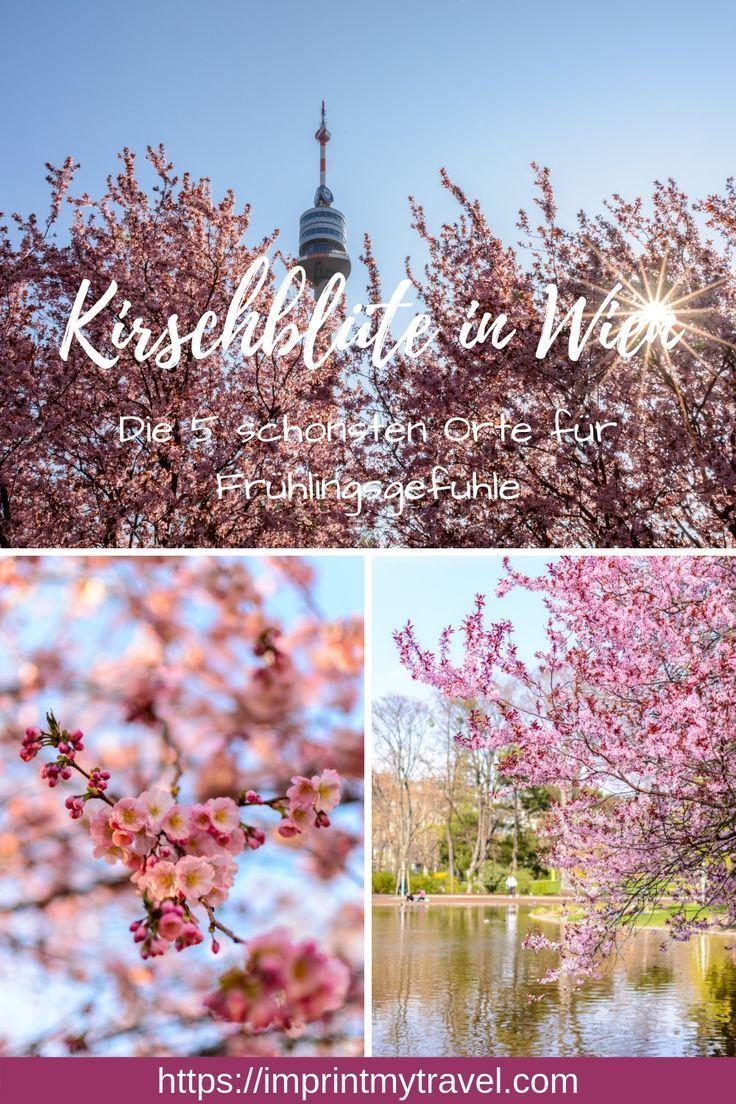 Kirschblüte in Wien- die 5 besten Orte für Frühlingsgefühle