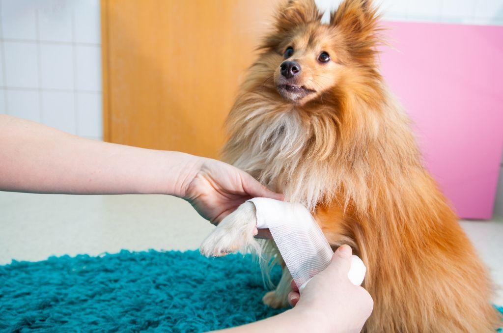 Expert reviews of darwins natural pet food dogs
