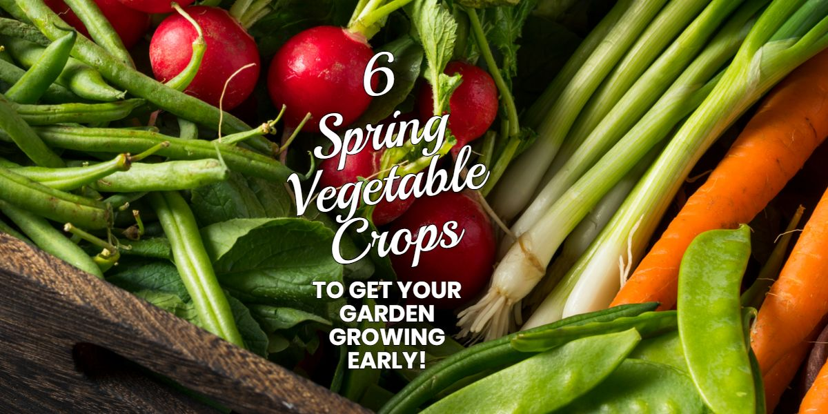 6 Spring Vegetable Crops To Get Your Garden Growing Early 400 x 300