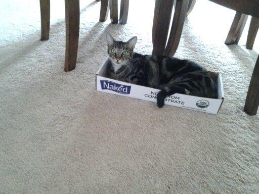 Any box will do