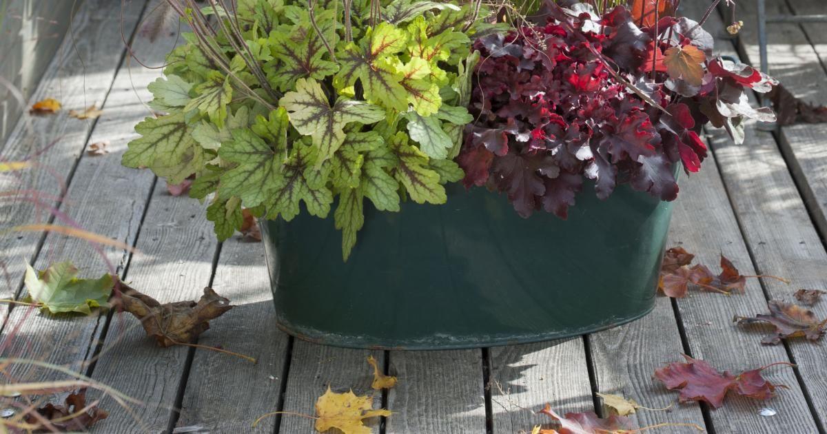 Die Schönsten Kübelbepflanzungen Mit Ziergräsern Und