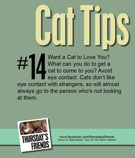 cat #tips #health #care - Caring for cat at Catsincare.com!- Top cats Tips at Catsincare.com!
