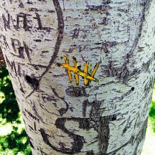 5sos carved this in a tree.