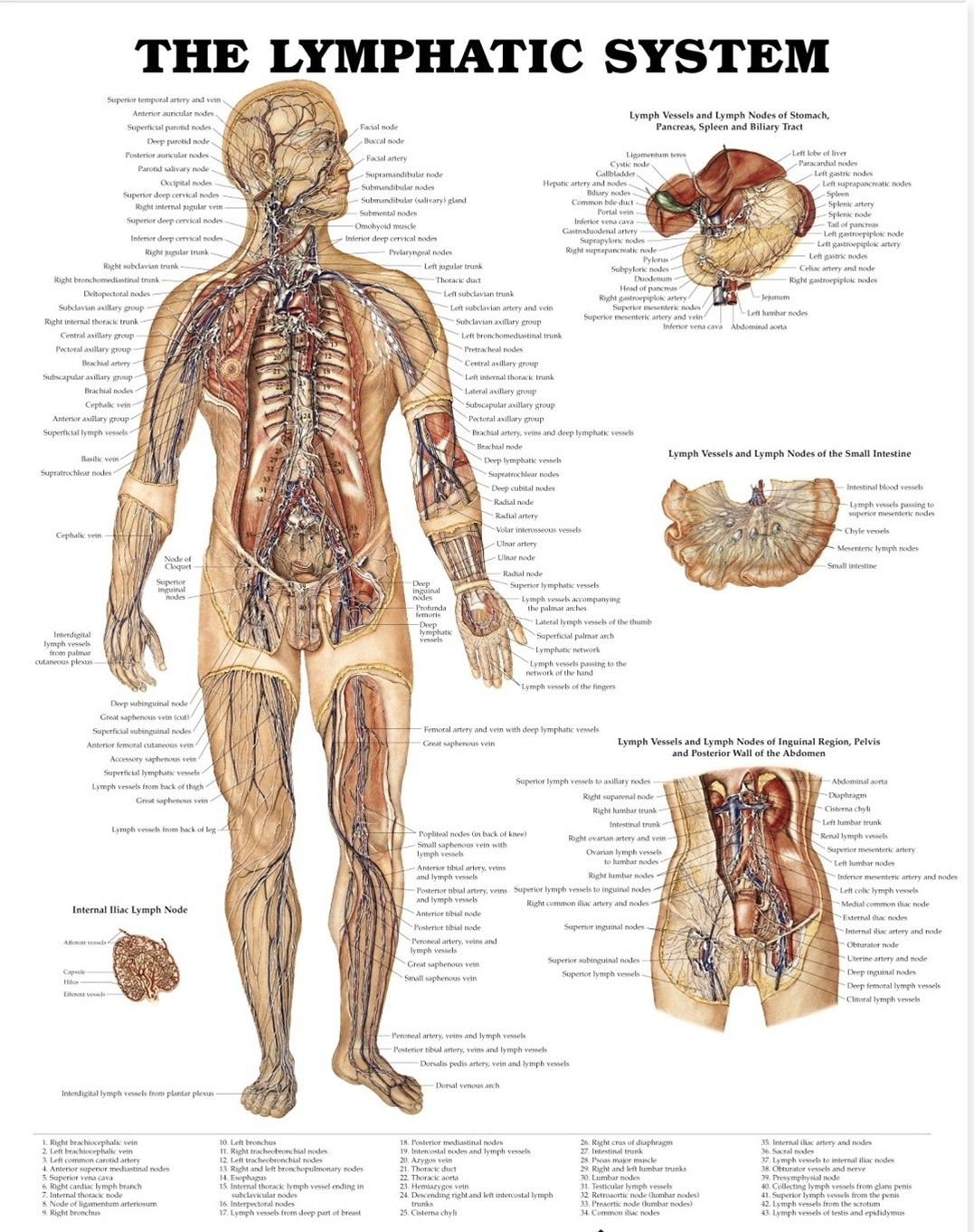 Lymphatic system..(: | Medical Terminology <3 | Pinterest | Sistema ...