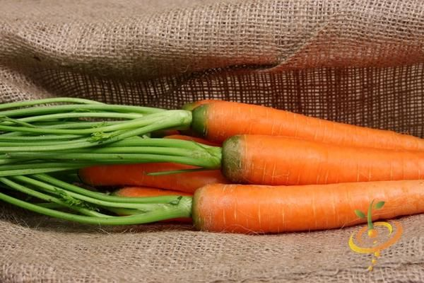 19 Frost Hardy Vegetables To Plant This Fall Winter 400 x 300