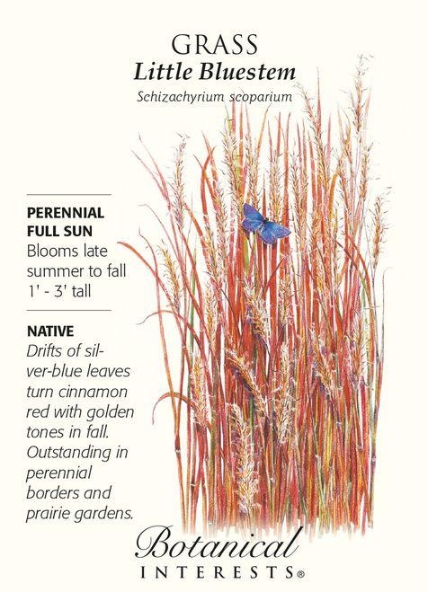 Little Bluestem Grass Seed