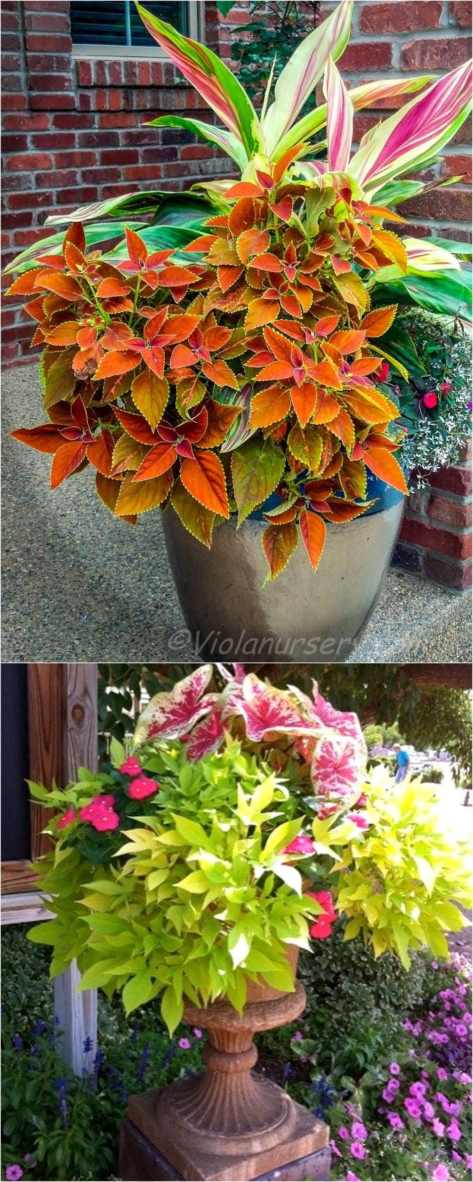 Best Shade Plants 30 Gorgeous Container Garden Planting 640 x 480