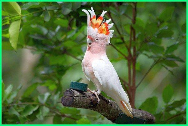 Burung Kakak Tua Dengan 10 Keunikannya Yang Harus Kamu Ketahui Di 2020 Burung Burung Kakatua Makanan Burung