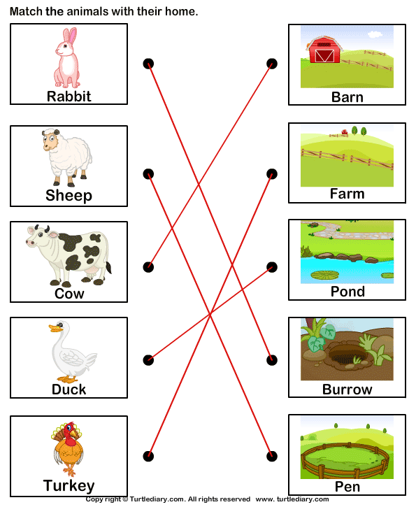 Match Farm Animals To Their Homes Answer Animal Worksheets Animals And Their Homes Farm Animals