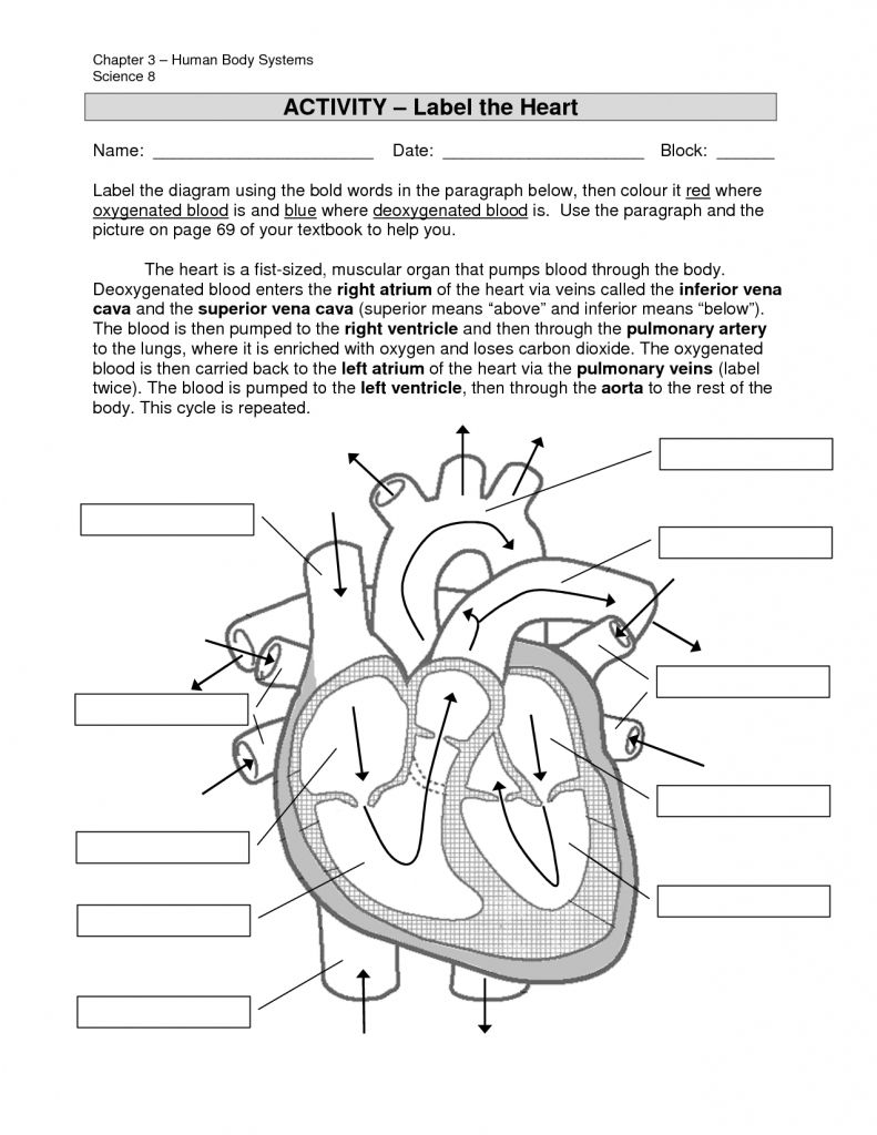 Simple Labeled Heart For Kids Blue And Red Diagram Of The