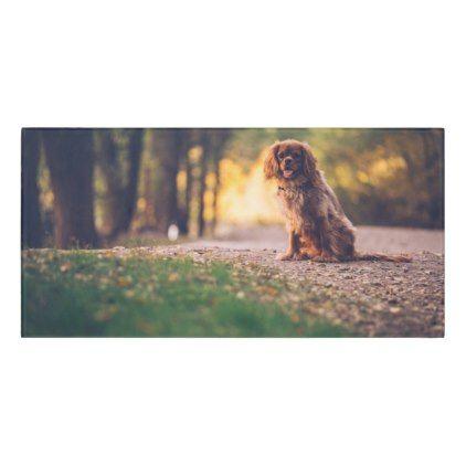 Golden Spaniel Dog Panting In The Sun On Path Door Sign Spaniel