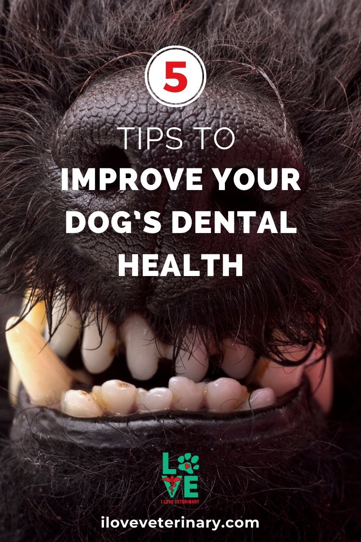pet dental insurance only