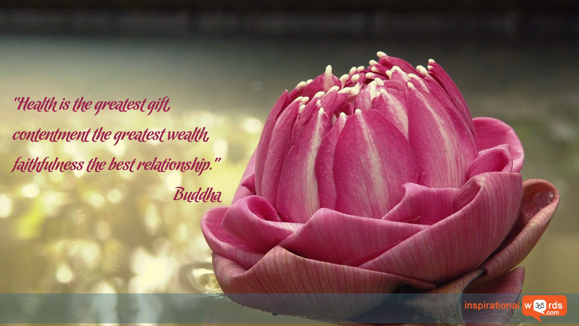 """Inspirational Wallpaper Quote by Buddha """"Health is the"""