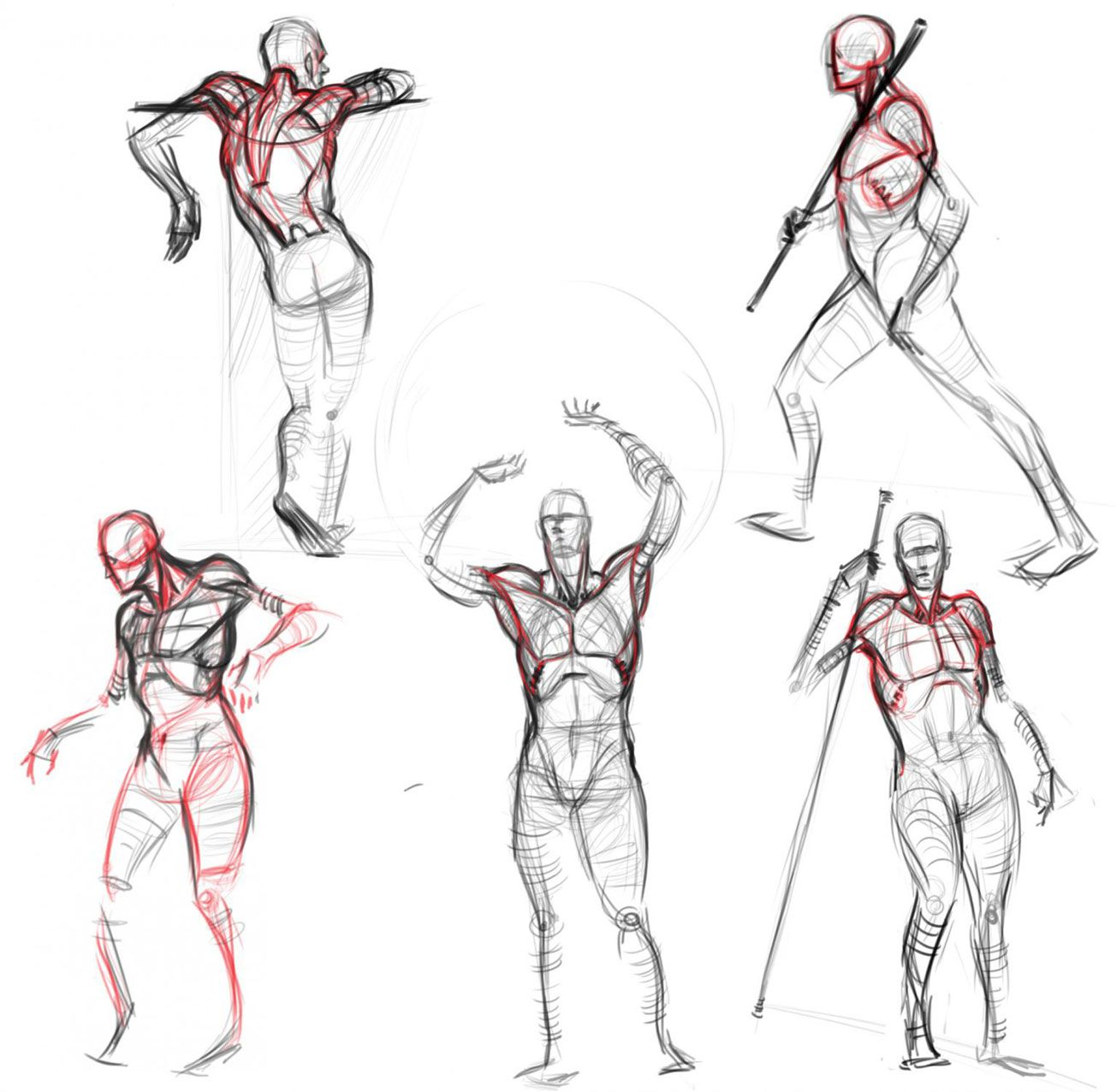 Analytical figure drawing — Male anatomy drawing references for ...