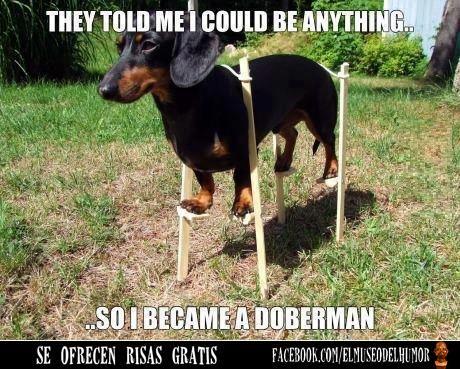 Me dijeron que podía ser cualquier cosa_ _  así que me convertí en un Doberman_ . #humor    www.elmuseodelhumor.com