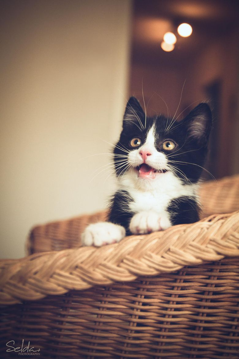 Little Monster By Selda Photography On 500px Cute Cats Cute