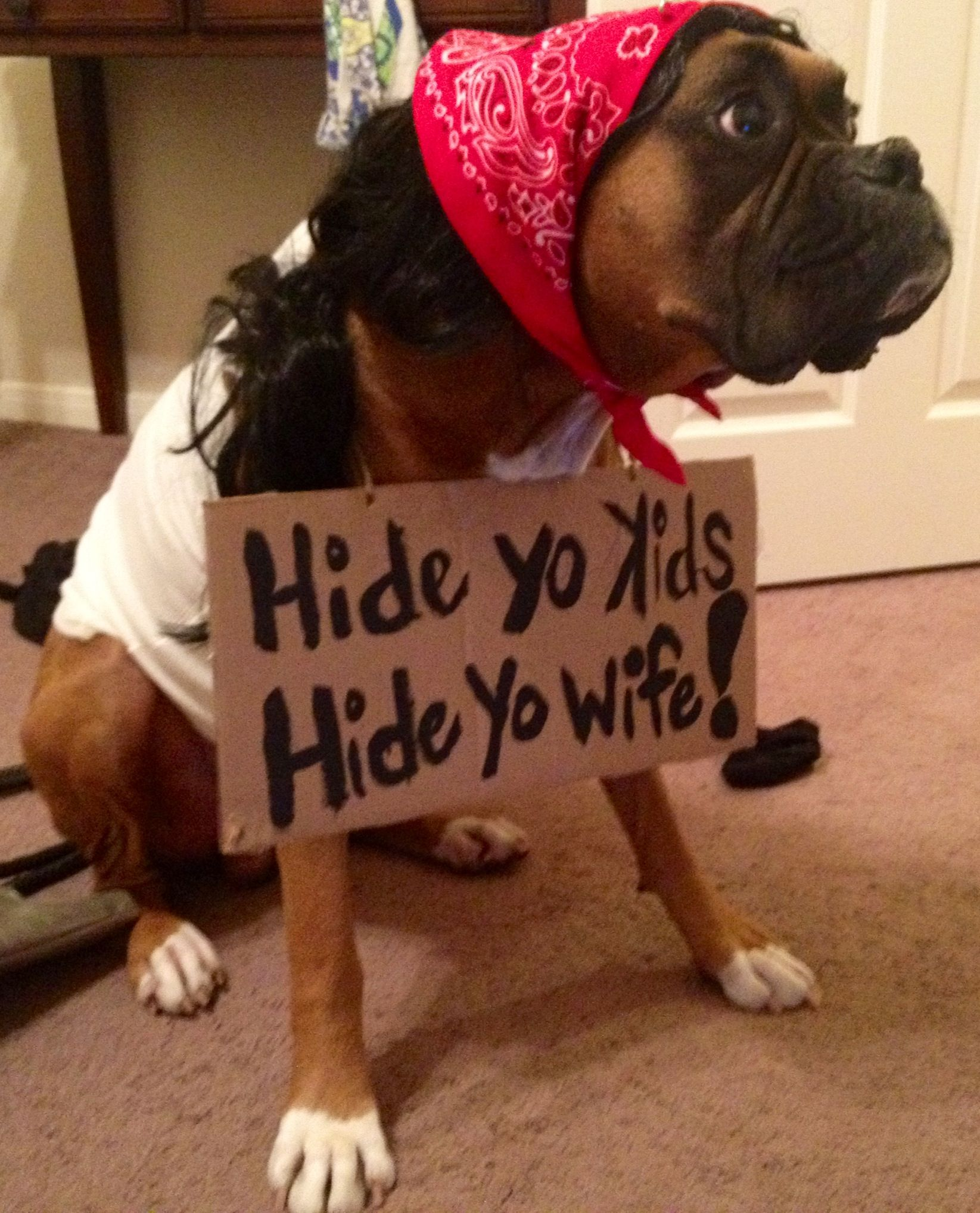 boxer halloween costume the infamous antoine dogson easiest diy costume ever hide yo kids hide yo wife - How To Make A Dog Halloween Costume