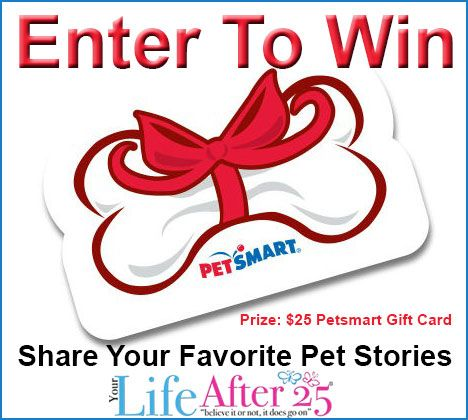 Add Yummy Flavor To Your Dog S Life With Alpo S New Wet Dog Cuisine Gift Card Giveaway Amazon Gifts House Gifts