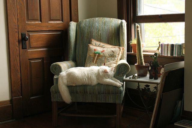 Tuesday. | Flickr – 相片分享! #cat
