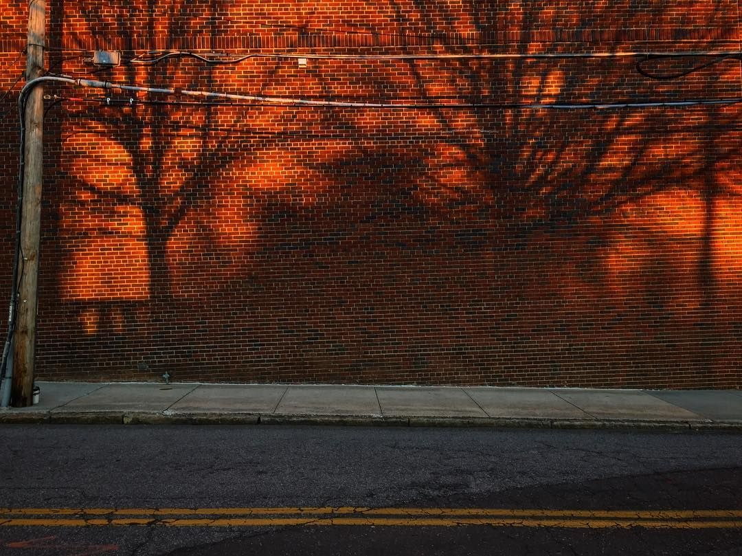 Trees Brick