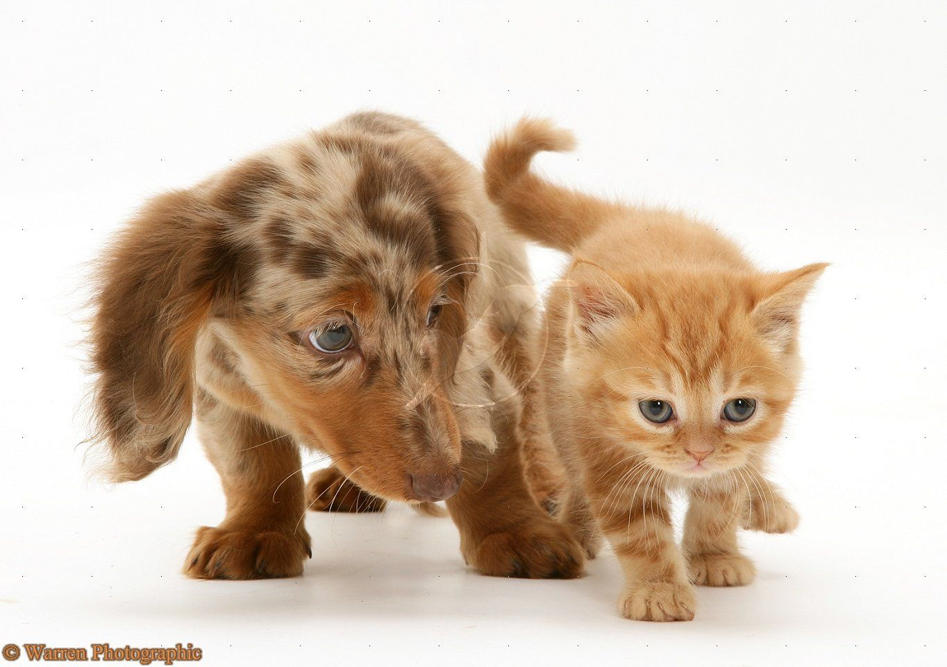 Tabby Cat Eye Disorders Problems To Be Aware Of Baby Dachshund