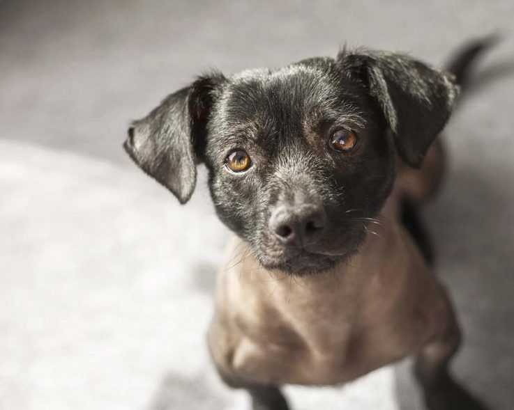 How to treat dog mange with home remedies dog mange