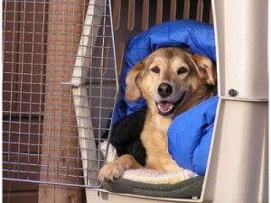 Weekend Crate Training Plan Wooftopia Dog Training Recreation